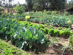 Агротехника овощей