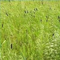 Рост кормовых трав