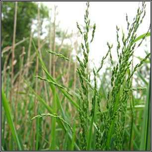 Травы в севообороте