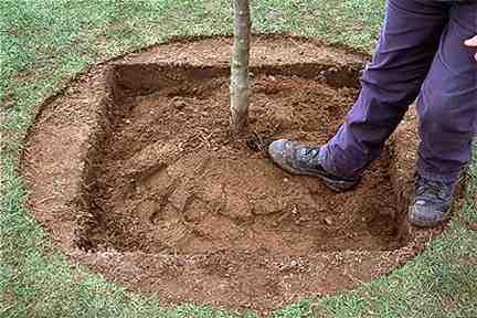 Способы посадки деревьев