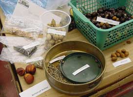 Как проводят стратификацию семян
