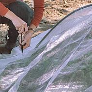 Размножение черенками под пленкой
