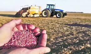 Предпосевное удобрение озимой пшеницы