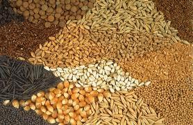 Качественные семена