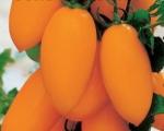 Сорт томата Золотая рыбка