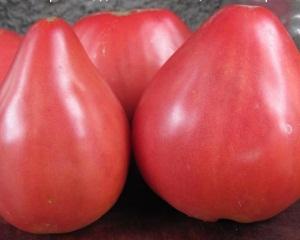 Сорт томата Батяня
