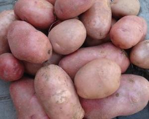 Сорта розового картофеля