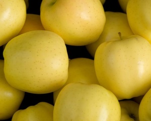 Сорта желтых яблок