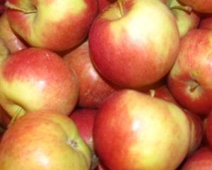 Сорт яблок Айдаред