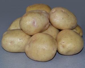 Сорта картофеля для средней полосы