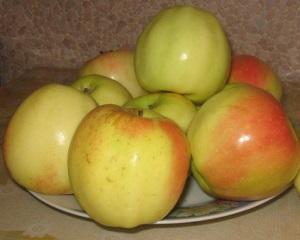 Сорт яблок Снежный Кальвиль