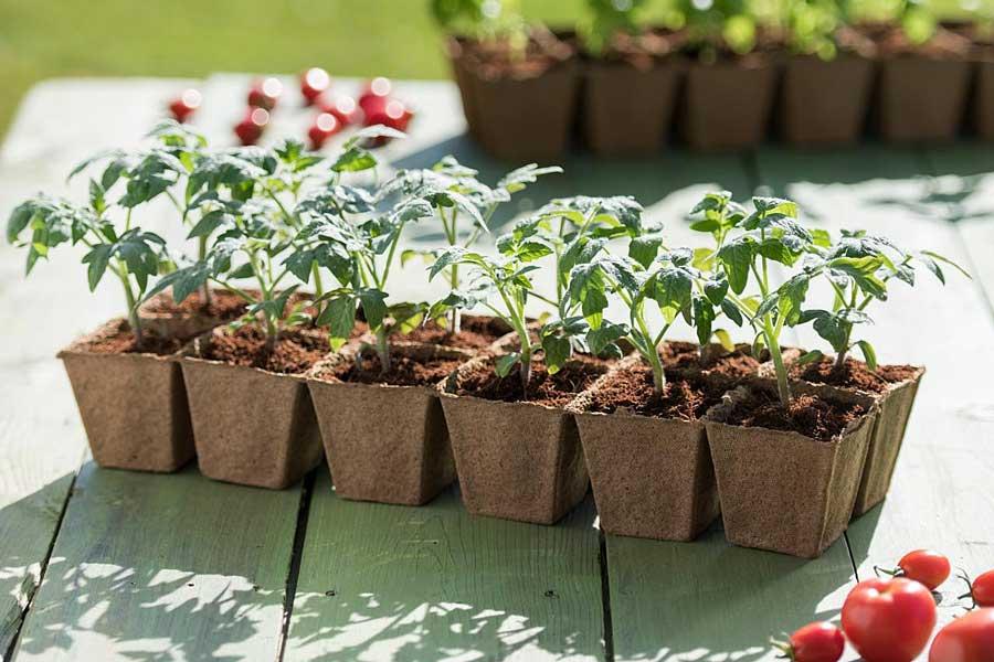 земля для пикировки рассады томатов